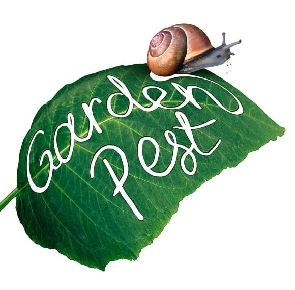 Integrated Pest Management by Bellantoni Landscape