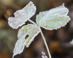 Winterizing Your Sprinkler System by Bellantoni Landscape