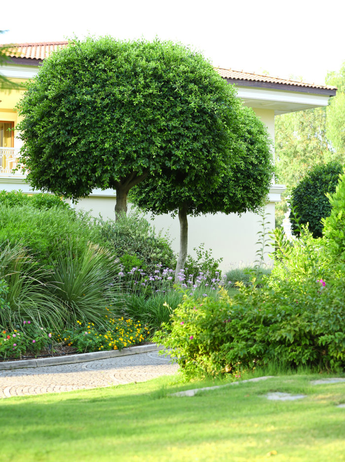 Trees for Your Landscaping by Bellantoni Landscape