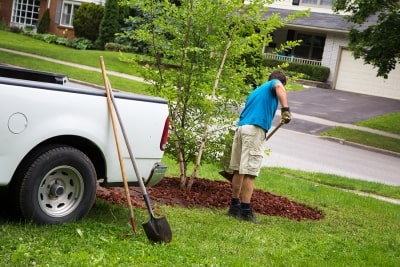Signs You Need a Landscape Renovation