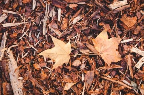 Benefits of Leaf Mulching by Bellantoni Landscape