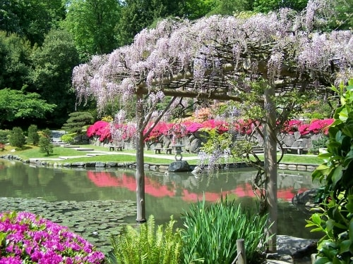Creating a Japanese Garden in Westchester County, NY
