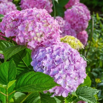 Choosing the Perfect Shade Plants for Your Landscape